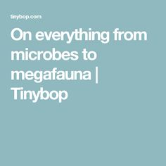 On everything from microbes to megafauna   Tinybop