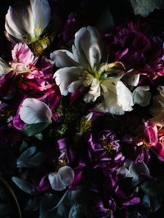 Still Life   Aiala Hernando, flower, dark, photography,