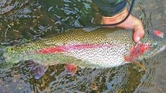 Big Alaska Rainbows on the Brain??? We Can Help! Booking Trips as soon as July 8!!! Get ready for your Trip of a LIFETIME!!!