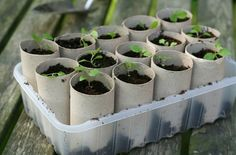 Grow seedlings in toilet paper rolls and when they are ready to plant, you simply put the whole thing in the ground (the rolls will decompose).