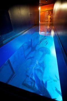 Shark Walk at the SEA LIFE London Aquarium - January! See if Jules or Em want to come!