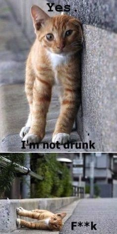 not drunk^^