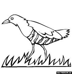 Free Birds Coloring Pages Color In This Picture Of An Slaty Legged Crake And Others With Our Library Online
