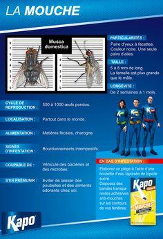 Fiche d'identité : Mouche - Insecticides Kapo