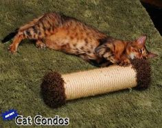 11 Inch Sisal Rope Post Roller: The Sisal Roller has a base filled with catnip that is great for cats to scratch. It also has a dangling pom pom and jingle bells. The toy can be rolled to entice your cat to pounce or left standing for your cat to play with on her own.