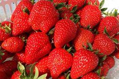 世界初!虫歯菌除去成分(BLIS M18)が配合された子供歯磨き粉「ブリアン」。ブリアンの効果・口コミはいかに!?子供の虫歯対策をされてるお母さん、ブリアン歯磨き粉で赤ちゃんから虫歯の予防を始めましょう! Strawberry, Fruit, Food, Essen, Strawberry Fruit, Meals, Strawberries, Yemek, Eten
