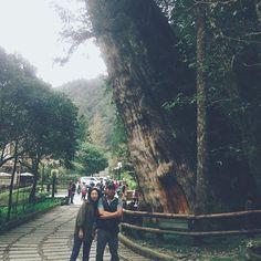 【mmmini_min91】さんのInstagramをピンしています。 《旁邊是孔劉的話......😎 . . #神木 #宜蘭 #明池森林遊樂區 #明池 #旅 #旅行 #台灣 #台湾 #traveler #tree #travel #taiwan #森》