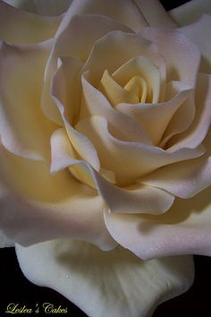 Peace Rose | Flickr - Photo Sharing!