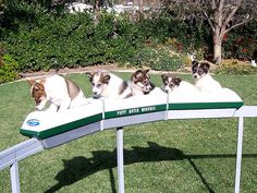 Puppy Mover Monorail. Whee, whee, wheeeeeee!! (I know. They're not pigs)
