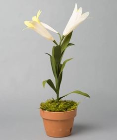 Potted Paper Easter Lily | Whimseybox