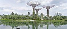 Visiter Singapour: Nos immanquables Nature, Building, Travel, Asia, Naturaleza, Viajes, Buildings, Destinations, Traveling