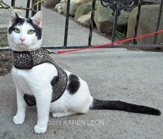 Award winning Kitty Holster - nearly Houdini proof and apparently cats dont mind walking in them