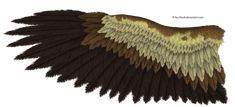eagle_wing_by_k1ku_stock-d58t3g1.png (2057×938) Morgan's Phoenix