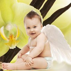 Angel Wings Fragrance Oil | Natures Garden Fragrance Oils #sweetscent #vanillascent #softvanillascent