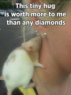 Afraid of rats and mice but this is cute Hamsters, Rodents, Funny Rats, Cute Rats, Animals And Pets, Baby Animals, Funny Animals, Strange Animals, Beautiful Creatures