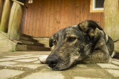 5 Signs Your Dog is in Pain --http://theilovedogssite.com/5-signs-your-dog-is-in-pain/?utm_content=img-group&utm_source=FB_AllDogPages&utm_medium=link&utm_campaign=5SignsPain_9-27-13