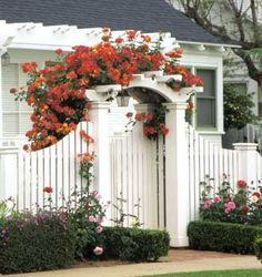 Garden Gate Add Color with Vines:   While a white picket fence and arbor are beautiful, they can be stark by themselves. Dress them up with colorful blooms. Here, an orange climbing rose creates a dramatic focal point.