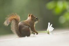 Une fleur a offrir by Andre Villeneuve