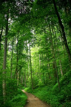 Big Creek Trail, Great Smoky Mountains National Park   Ben Pierce   Flickr