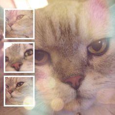 #cute Murphy #snuggles tonight  #cat #cats #catsofinstagram #cats_of_instagram #catselfie #catsofig #catstagram #acatslife #acatlikecuriosity