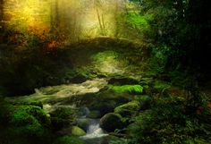 Rippling Waters • Claudia McKinney