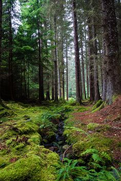 Photograph - Farigaig Forest by Chris Dale , Forest Path, Pine Forest, Foto Nature, Walk In The Woods, The Great Outdoors, Mother Nature, Paths, Woodland, Nature Photography