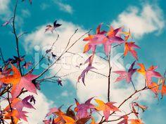 Folhas coloridas - fotografia de stock royalty-free