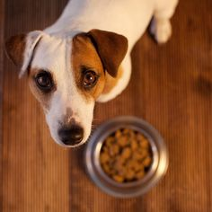 Grain-Free Dog Food and Heart Problems: What We Know - My Pet Island Lhasa Apso, Springer Spaniel, Picky Dog Eater, Shih Tzu, My Dog Wont Eat, Dog Eating Food, Most Common Allergies, Hyper Dog, Les Croquettes