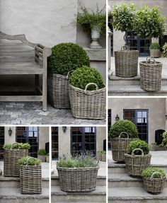 wicker baskets and topiary