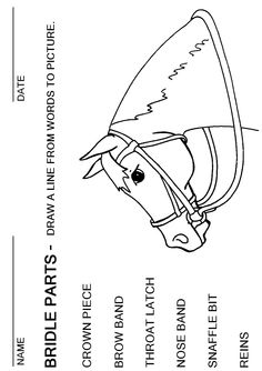 booklet pg 16 – Bridle Parts: Draw a Line from the word to the picture. The res… – Art Of Equitation Horseback Riding Lessons, Horse Information, Horse Anatomy, Horse Games, Horse Coloring Pages, Horse Crafts, Horse World, Horse Tack, Show Horses