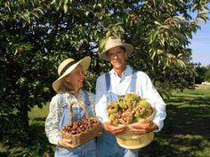 ccs-nut-orchard-21.jpg (2048×1536)