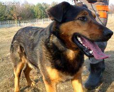 ZEFIR  To młody, bardzo wesoły psiak.  Nie jest agresywny do innych psów.  Uwielbia towarzystwo człowieka i zabawy. Na spacerach uwielbia ruch i poznawanie otoczenia.  Ma ciekawe trójkolorowe umaszczenie w kolorze czekolady z elementami rudego:)  Idealnie nada się dla rodziny z ogrodem, gdzie będzie mógł się wybiegać.  Jego mordka jest bardzo urocza i sympatyczna !