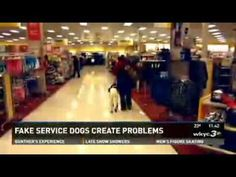 Fake Service Dogs Create Real Problems - YouTube