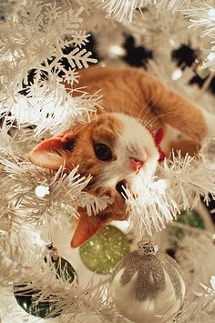 Christmas cats www.hillsidevets.co.uk