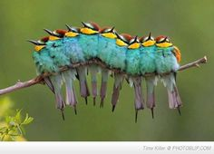 I thought it was a caterpillar.