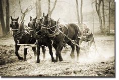 Appalachian culture. I am old enough to remember when farming was done this way. I loved mules then and still do now.