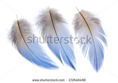 Feather Isolated Sto