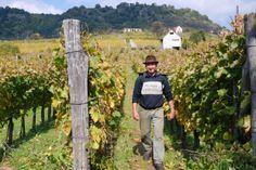 Harvest Hungary, Harvest, World, Wine