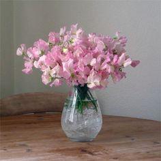 I Love The Smell Of Sweet Peas Vintage Flower Arrangements Vase Pea