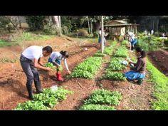 Escuela Segunda Unidad Botijas #1 - www.agroecologiapr.org - YouTube