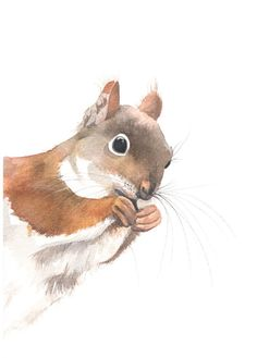Squirrel+painting+S043++print+of+watercolor+by+LouiseDeMasi