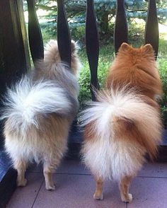 Nothing cuter than a Pom from the back :)                                                                                                                                                                                 More