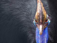 tatyanabinovskatours: Daintree Forest, crocodiles and cassowary birds