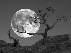 Super Ideas Tree Photography Black And White Full Moon Moon Moon, Moon Rise, Blue Moon, Moon Photos, Moon Pictures, Tattoo Mond, Wald Tattoo, Tattoo Caveira, Moon Dance