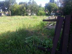Empty, Plants, Flora, Plant, Planting