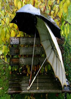 Umbrella Wallpaper Miscellaneous Other mobile Wallpapers) – Wallpapers Mobile Rain Umbrella, Under My Umbrella, Walking In The Rain, Singing In The Rain, Feng Shui, Compositor Musical, Chair Photography, Artistic Photography, White Photography