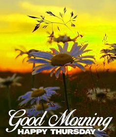 Good Morning Thursday Images, Happy Thursday Images, Thursday Greetings, Happy Thursday Quotes, Gd Morning, Thursday Morning, Fb Quote, Months In A Year, E Cards