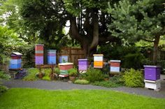 Backyard Beekeeper-preety hives