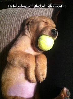 There is no parting this pup and their ball!