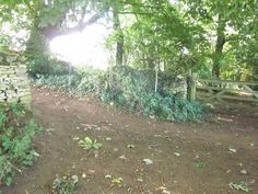 From Moreton in MArsh to Batsford, a fork in the wood